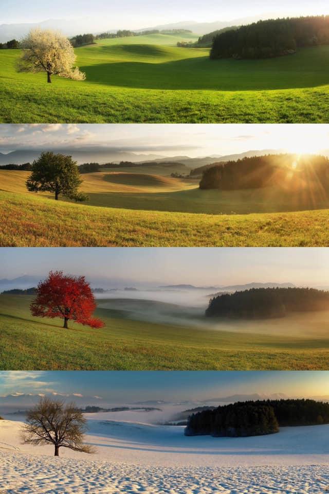 The same tree throughout the seasons